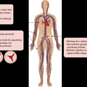 Dejstvo lekova za kardiovaskularne bolesti